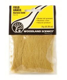 Field Grass dorado